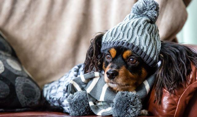 I cani hanno freddo? Consigli e rimedi