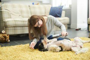 Come pulire il cane