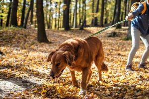 Guinzaglio per cani che tirano
