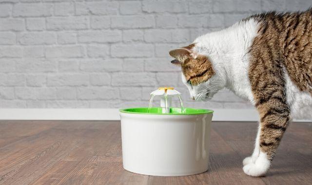 Gatto che non beve: 10 rimedi