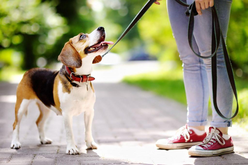 Guinzaglio per cani come usarlo