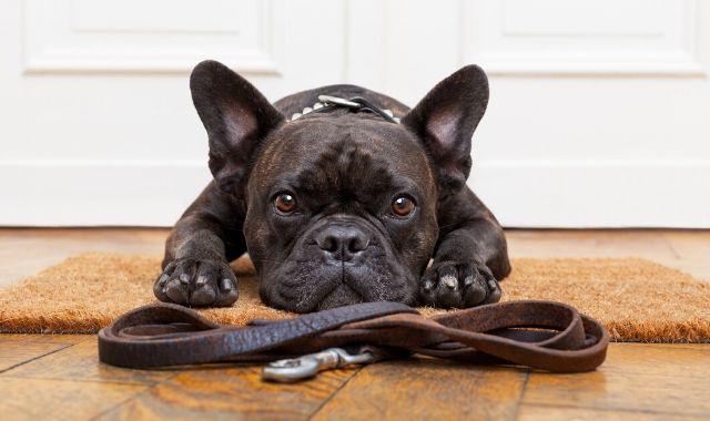 Guinzaglio per cani: come scegliere il migliore