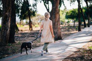 Attività fisica cane incinta