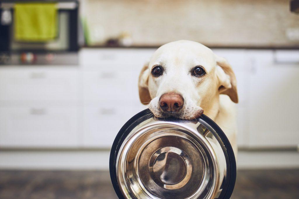 Cambiare crocchette cucciolo