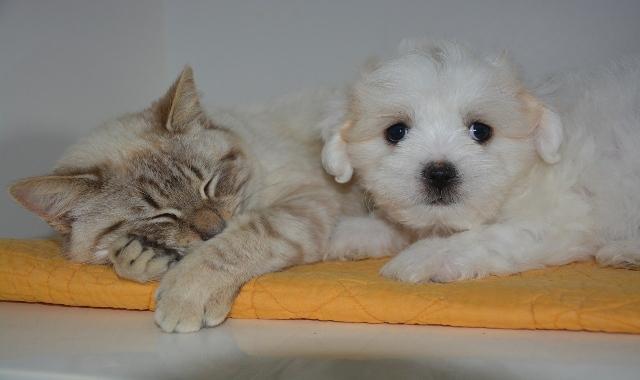 coronavirus cane e gatto pulizia zampe
