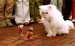 Nomi di gatti famosi film