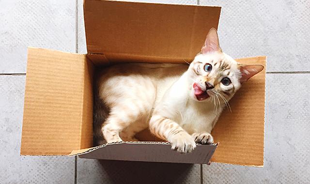 Gatto strabico: esiste lo strabismo nei gatti?