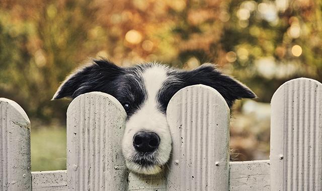 Il tuo cane scappa dal cancello? 5 modi per impedirglielo