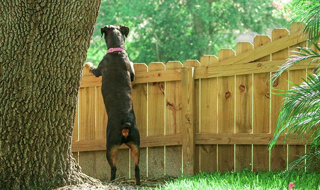Come non fare scappare il cane dal cancello