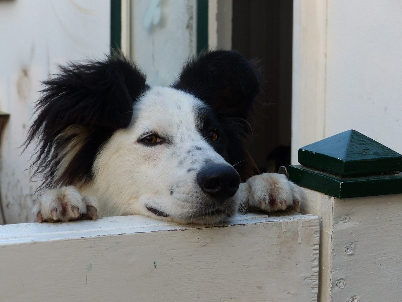recinto per cani aperti