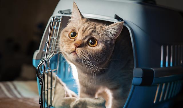 trasportino per gatti quando utilizzarlo