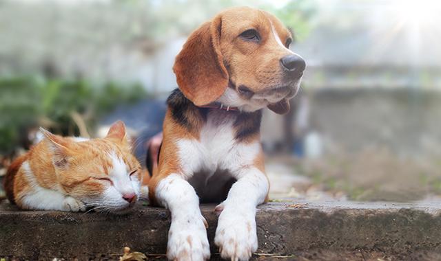 Convivenza cane e gatto: 5 consigli per vivere insieme