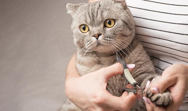 Tagliare le unghie al gatto: sì o no? Tutto quello che ...