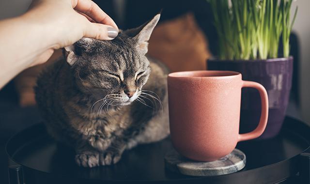 perchè i gatti fanno le fusa cause