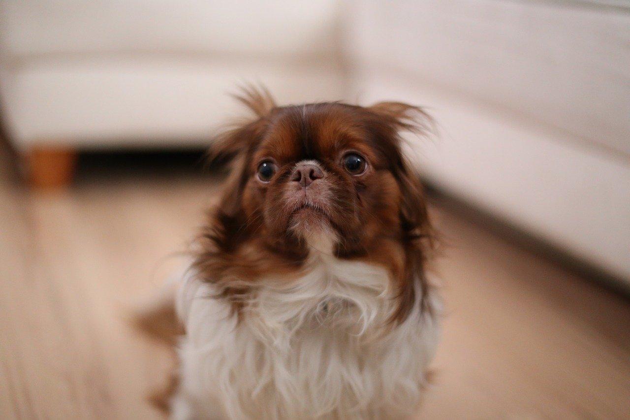 ansia da separazione cane le razze più predisposte