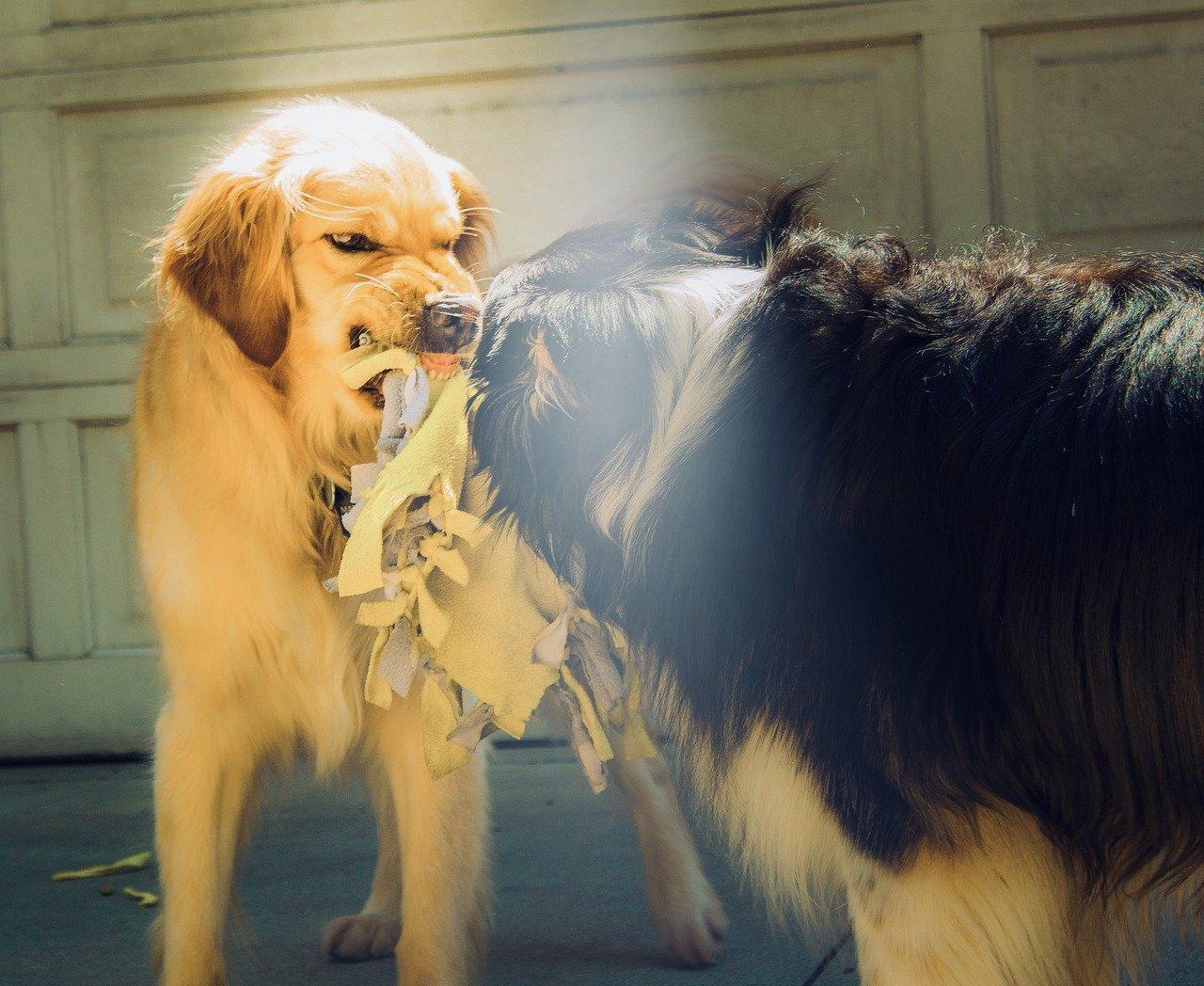 cane aggressivo tipi di aggressività