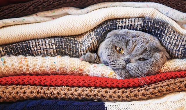Raffreddoe gatto cause e rimedi