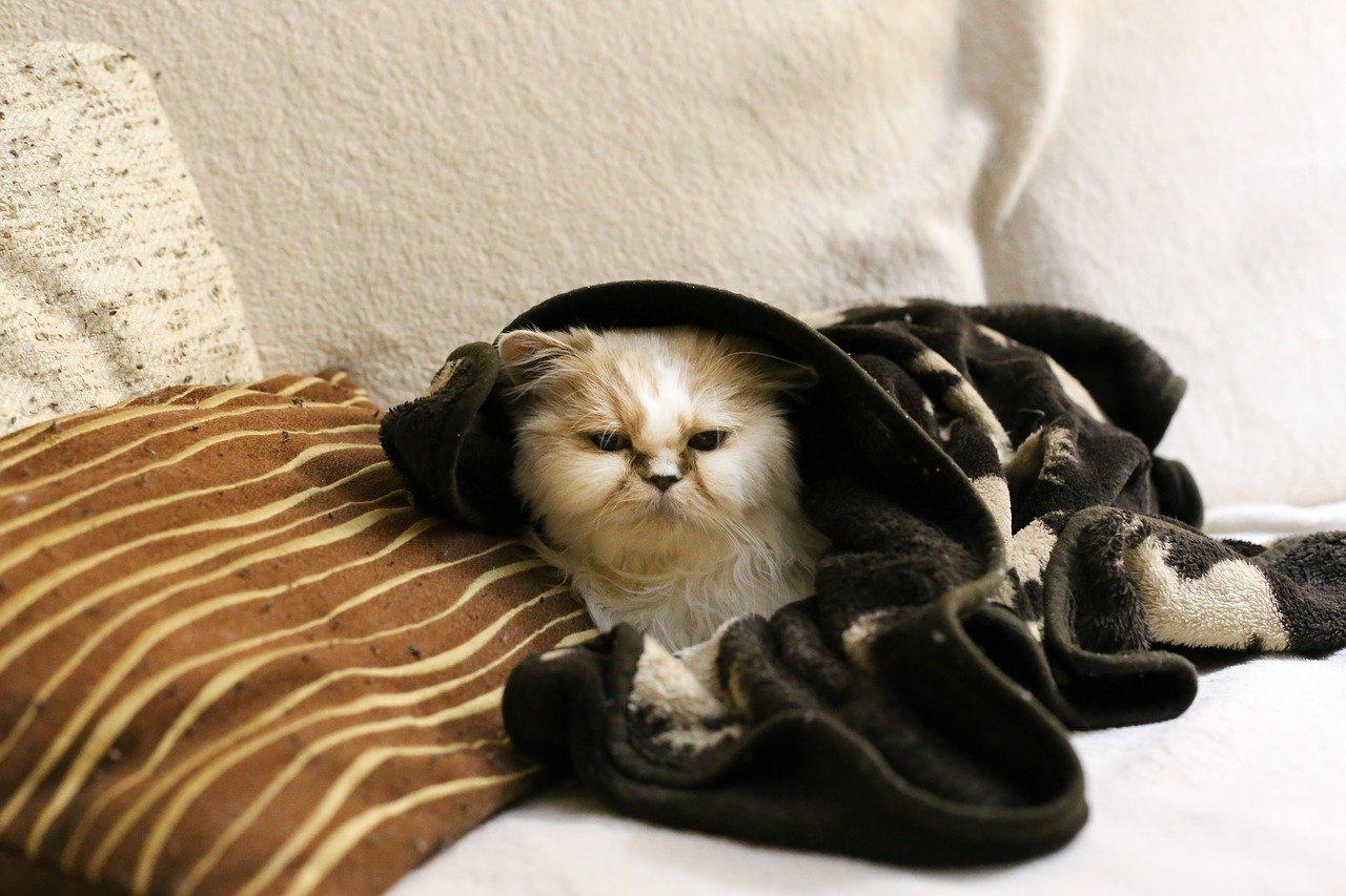 raffreddore gatto prevenzione